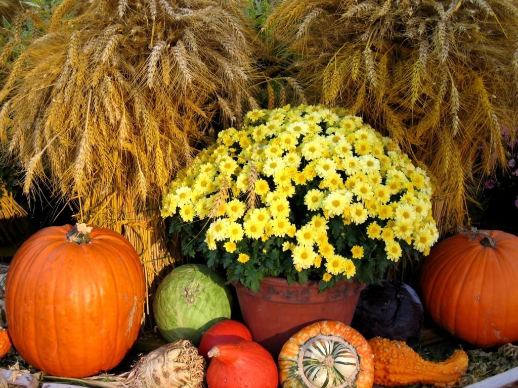 Podzimní dekorace bytu - jak ji vytvořit?